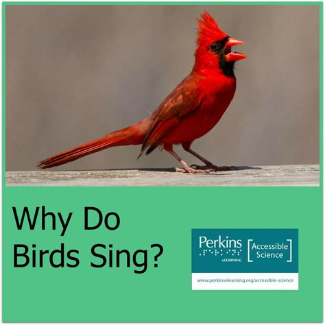 why do birds sing accessible science