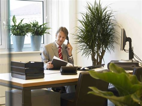 plantes de bureau aménagement de plantes d 39 intérieur pour le bureau de travail