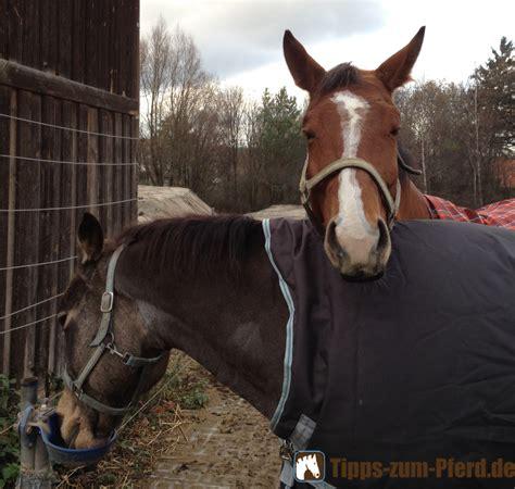 kaufberatung pferdedecken tipps zum pferd
