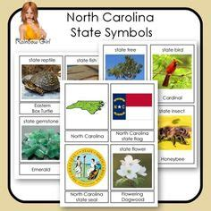 state symbols cards tpt social studies lessons 438 | a4d04315d8cef14bc98422222a780887 ellis early childhood