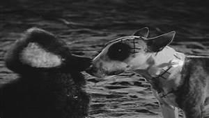 'Frankenweenie' (1984) - Frankenweenie Image (29575143 ...