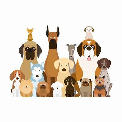 Dog Breeds Illustration Vector Pet Pekingese Dogs