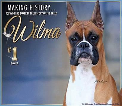Dog Akc Shepherd October Wilmington Caninechronicle National