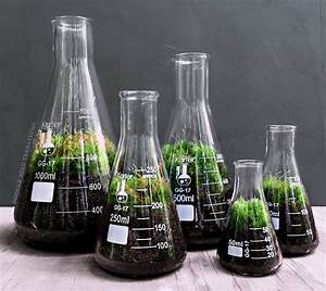 Chemistry Terrarium Gift Set with Indoor Plants in Glass ...