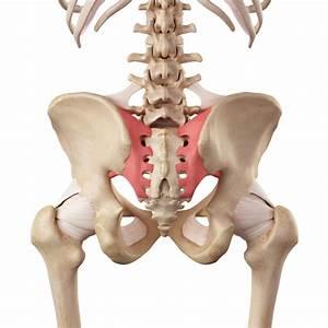 Sacroiliac Joint Dysfunction U00bb Northwest Orthopaedic