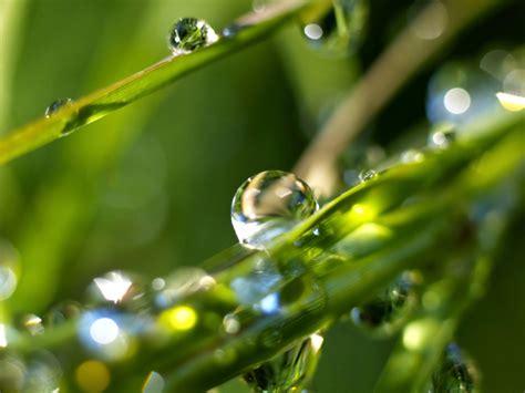 green rain rain nature wallpaper  picture gallery