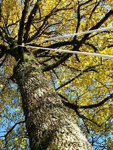 Repulsif Chauve Souris Efficace : onf le filet et la canop e une technique simple et efficace pour la capture des chauves ~ Melissatoandfro.com Idées de Décoration