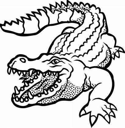 Crocodile Drawing Clipart Animal Alligator Coloring Vector