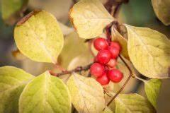 Magnolie Blüht Nicht : wann bl ht eine magnolie im august so klappt die 2 bl te ~ Buech-reservation.com Haus und Dekorationen