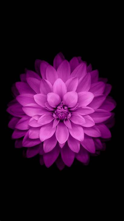 Flowers Purple Flower Iphone Nature Background Wallpapers