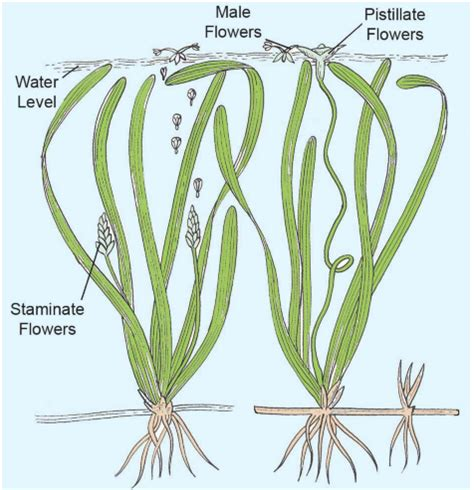 Diagram Of Water Flower by Pollination Concepts Types Advantages Disadvantages