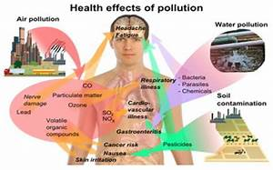 Essay on human impact on the environment - writefiction581 ...