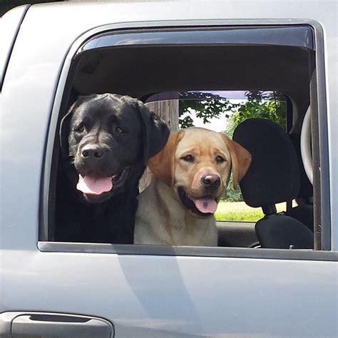 angie jurisson meet  puppies     loving