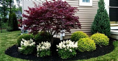 colorful shrubs use these colorful shrubs and shrub sized trees to offer