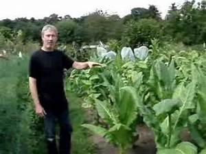 Tabak Selber Anbauen : tabak kweken in je eigen tuin doovi ~ Frokenaadalensverden.com Haus und Dekorationen