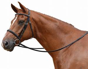 Image Gallery horse bridle