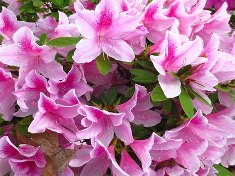 flowers to plant in spring flowers to plant in april wallpapers13 com