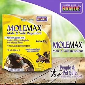 Top 10 Mole Repellents Of 2020