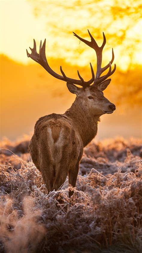 Animal Deer Wallpaper - realtree deer wallpaper 183