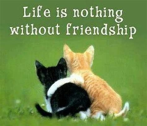 friends quotes life    friendship