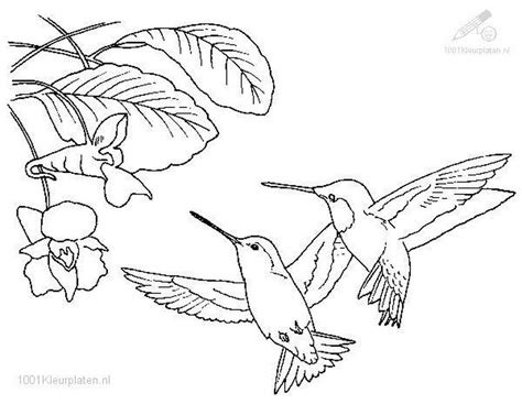 Coloringpages Animals Birds Hummingbird Coloring Page