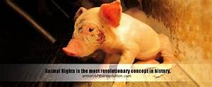 Animal Rights 101