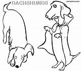 Dachshund Coloring Pages Printable Dog Frise Bichon Wiener Colorings Dogs Coloringway Getcolorings Rescue Puppy Getdrawings sketch template