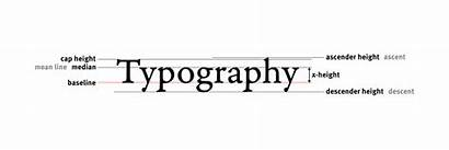 Typography Line Terms Svg Alternate Guide Elements
