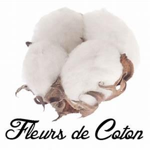 Bouquet Fleur De Coton : fleurs de coton les appartements louise ~ Teatrodelosmanantiales.com Idées de Décoration