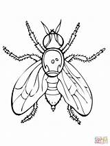 Fly Coloring Fruit Firefly Drawing Printable Coloriage Mosca Mouches Lightning Colorear Bug Disegni Supercoloring Ausmalbilder Colorare Dibujos Coloriages Fruta Dibujo sketch template