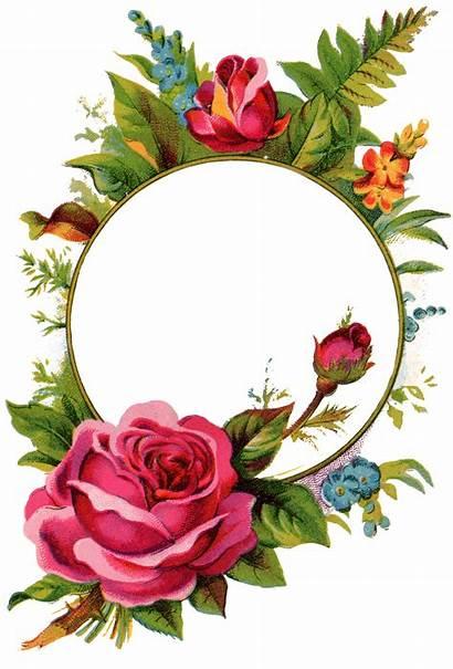 Rose Frame Frames Roses Flower Floral Clipart
