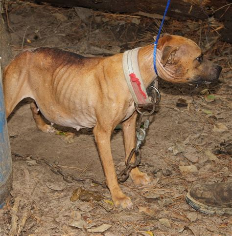 houston man  face  criminal charges  dogs