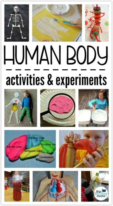 best 25 human crafts ideas on human 727 | cdd278e274a72d807abc553f48893727 human body activities for kids experiment