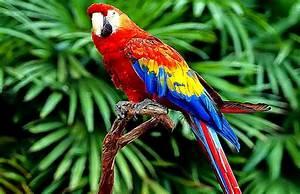 Beautiful Colorful Parrot Birds Wallpapers Hd Desktop ...