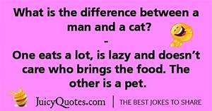 What Are Some Cat Jokes Quora