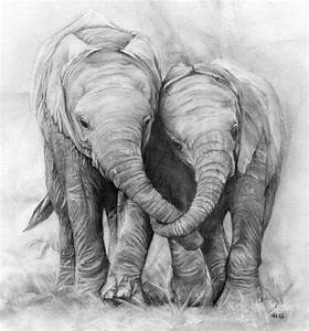 Elephants. Pencil drawing - a photo on Flickriver