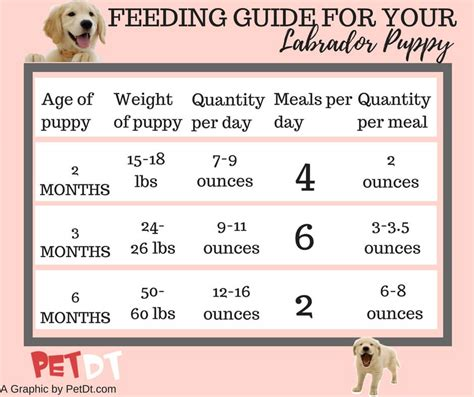 guide    puppy food  labs petdt