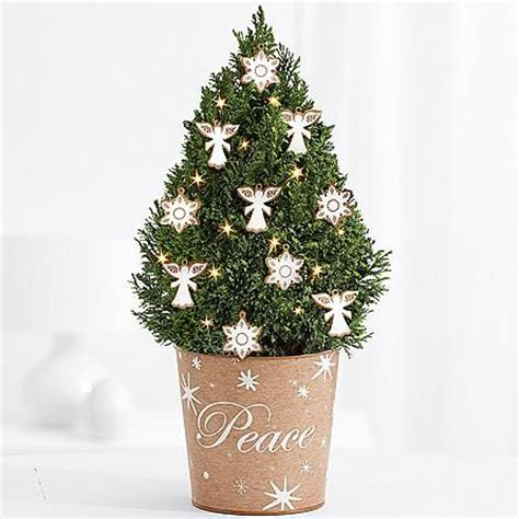 european cypress christmas tree 17 best images about gift ideas on floral arrangements cabbage roses and mothers