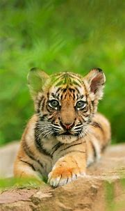 Pin by Roxie Samuel on Животный мир | Baby animals ...