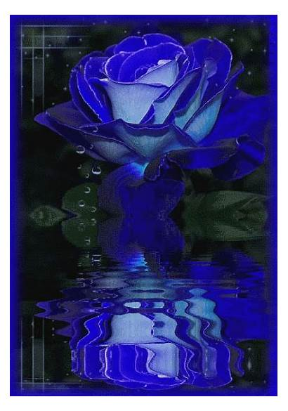 Gifs Azul Imagens Celular Lg Rosas Ref