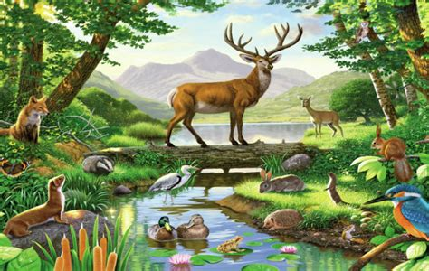 Forest Animal Wallpaper - forest animals wallpaper