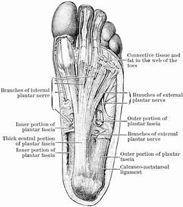Diagram Of A Human Foot Human Foot Diagram