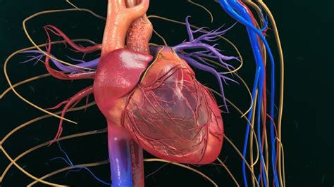 Scientists Create Heart Cells Better, Faster, Stronger