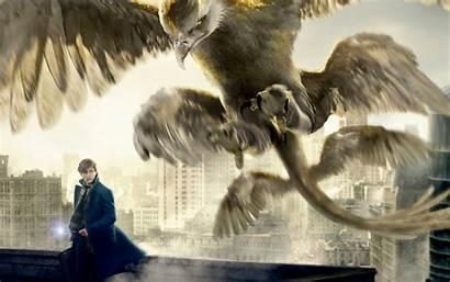 Beasts Fantastic Thunderbird Them Newt Scamander Wallpapers