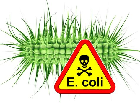 warning  coli outbreak  canada dr dina kulik