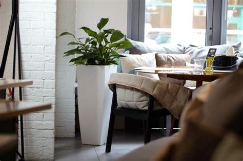 Große Pflanzen In Innenräumen