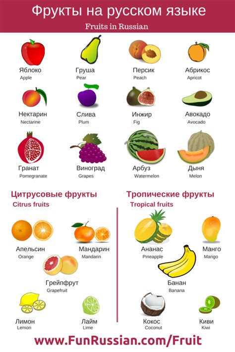 Fruits And Berries In Russian  Russian For Beginners  Basic Russian  Pinterest Russian