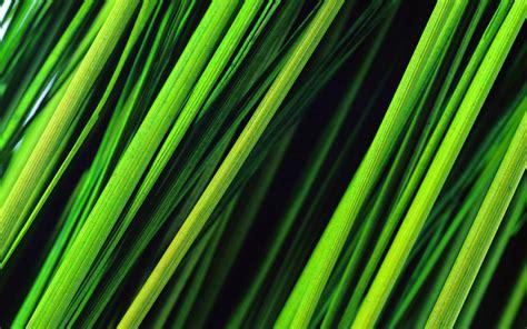 Tall Grass Wallpapers