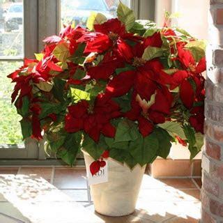 weihnachtsstern pflanze deko k 252 nstliche weihnachtsstern kunstblumen deko