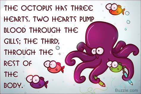 these octopus facts will surely ignite the curiosity of 862   1200 314014 octopus facts for kids